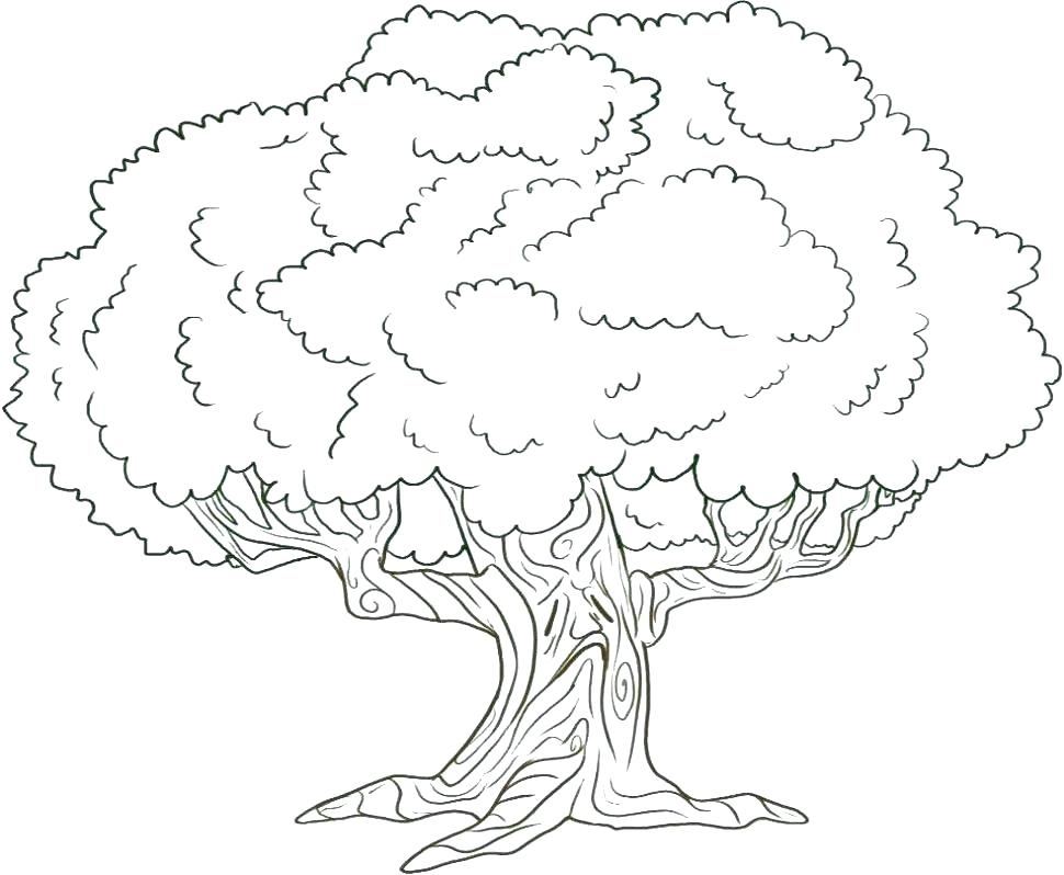 970x798 Trees Coloring Pages Oak Tree Page For Kids Pal On Kids Christmas
