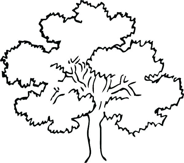 600x533 Oak Tree Coloring Page