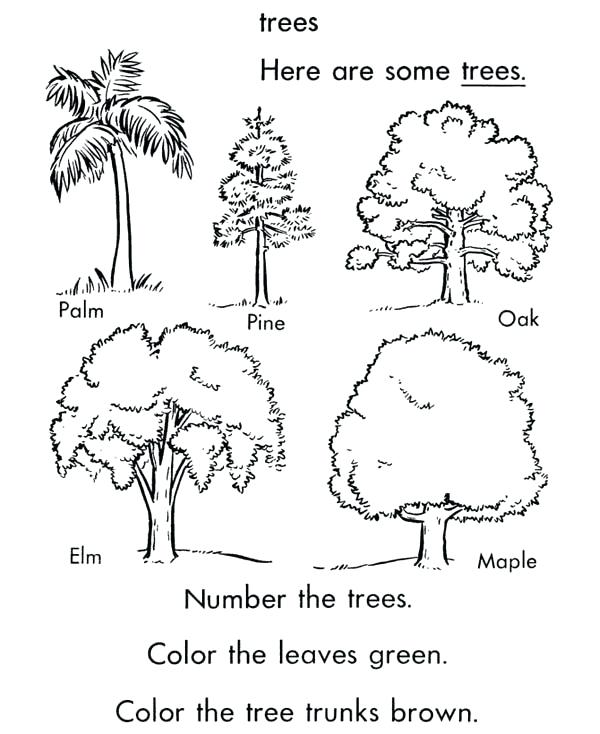 600x734 Oak Tree Coloring Pages