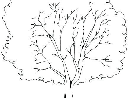 440x330 Oak Tree Coloring Pages Teleks Site