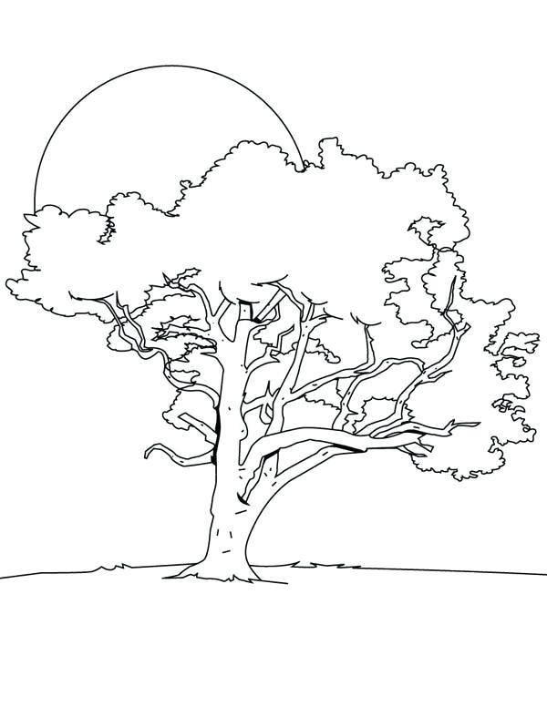 600x776 Bare Tree Coloring Page Oak Tree In The Night Coloring Page Bare