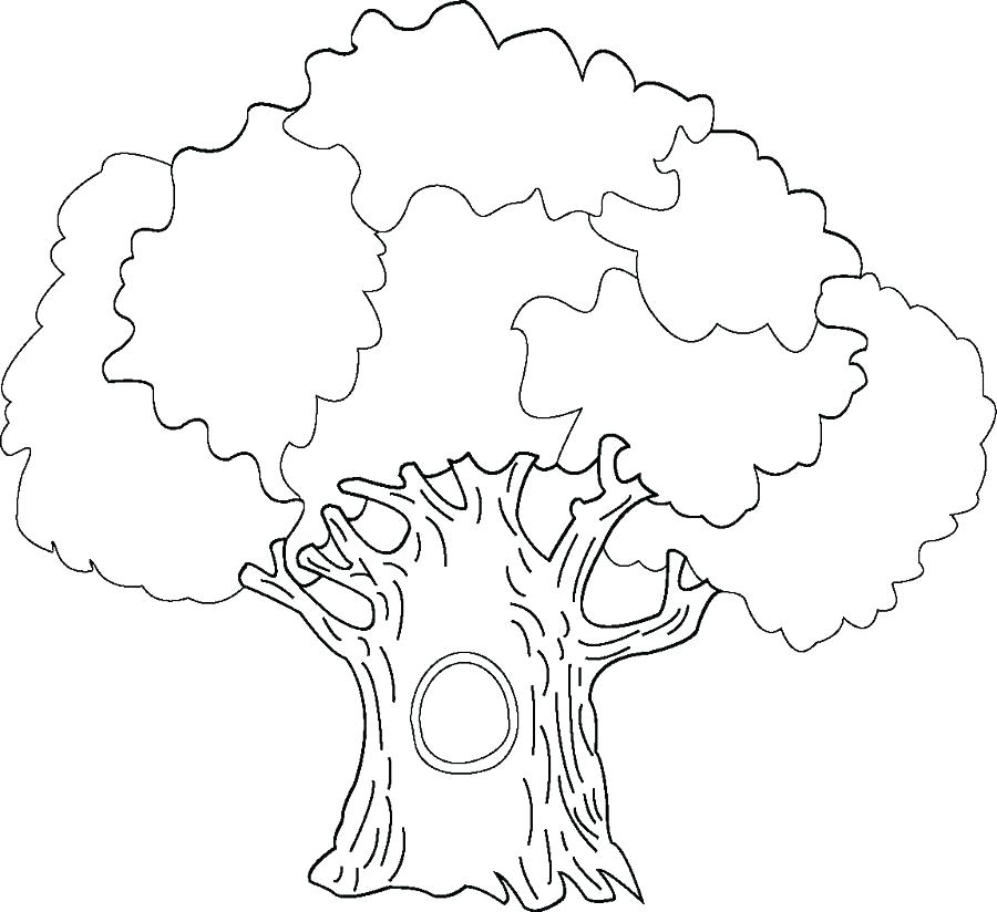 900x824 Coloring Page Tree Oak Tree Coloring Page Tree Coloring Pages Tree
