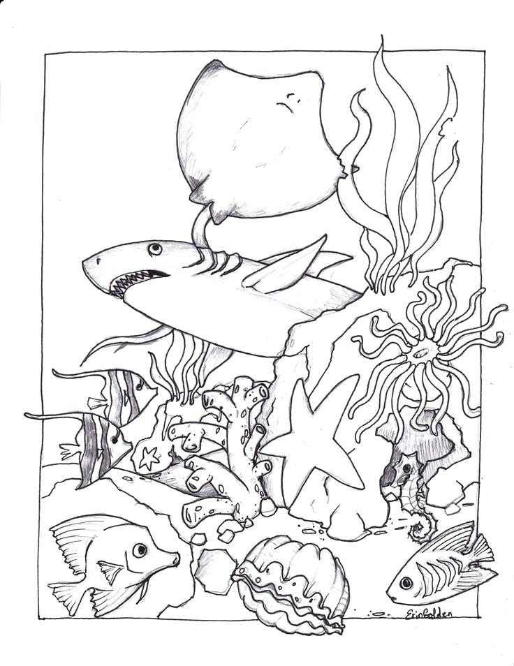 736x954 Manta Ray Coloring Page Best Ocean Coloring Pages Ideas On Ocean