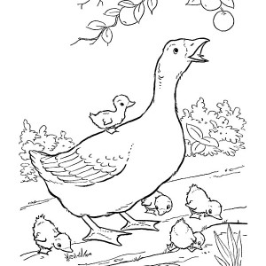 300x300 Coloring Pictures Of Farm Animals And Their Babies Stunning Design
