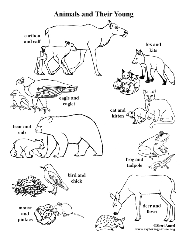 612x792 Animals And Their Young Coloring Page