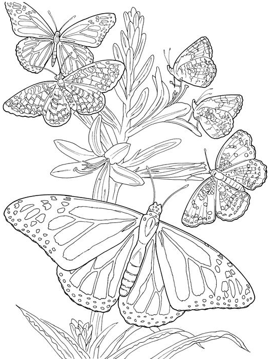 536x707 Totally Awesome Free Adult Coloring Pages The Quiet Grove