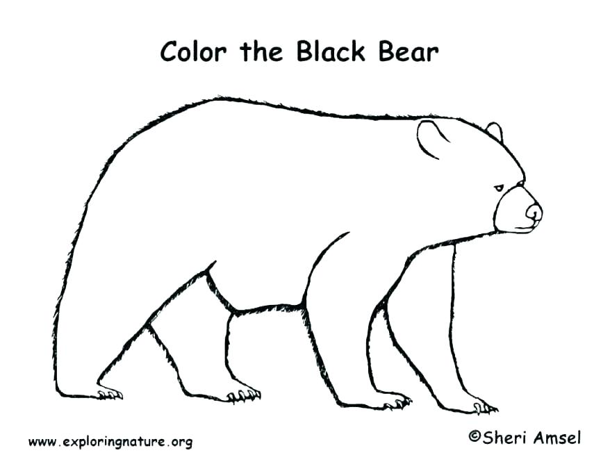 878x678 Coloring Page Bear Coloring Page Of Bear Black Bear Coloring Page