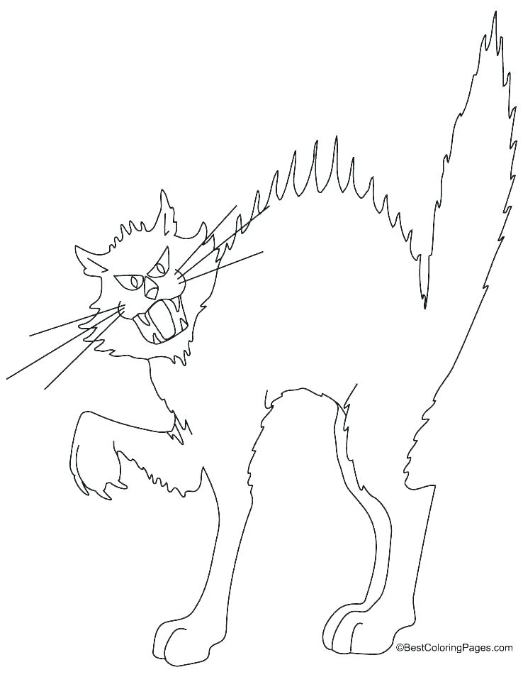 738x954 Black Cat Coloring Page