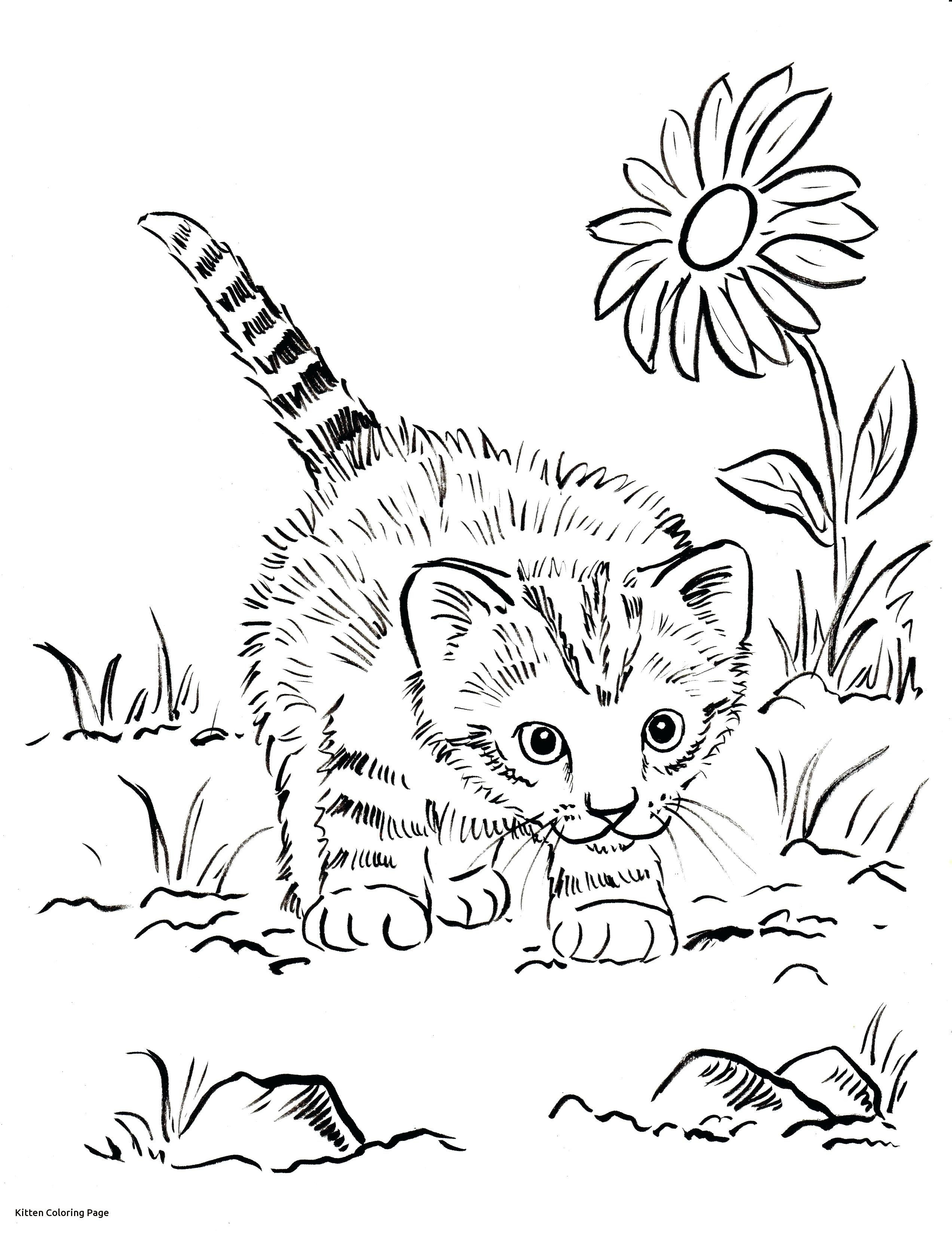 2545x3300 Kitten Color Page Great Ba Kittens Coloring Pages Throughout Acpra