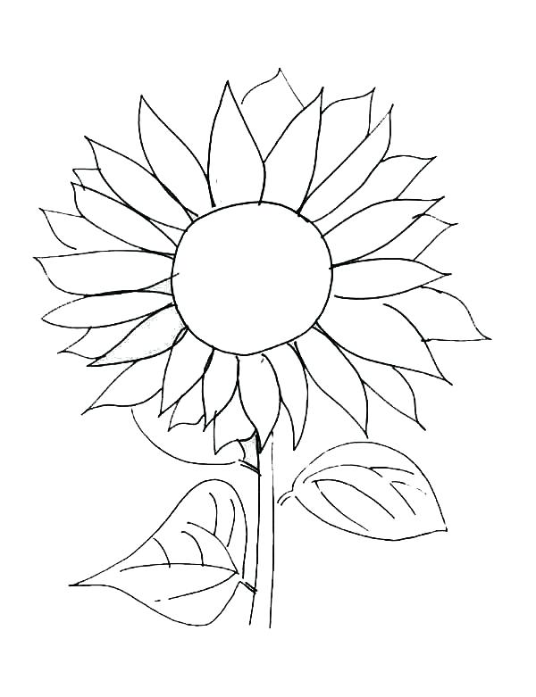 600x781 Sunflower Coloring Book Pages Deepart