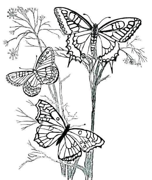 520x617 Coloring Pages For Year Olds Coloring Pages For Year Coloring