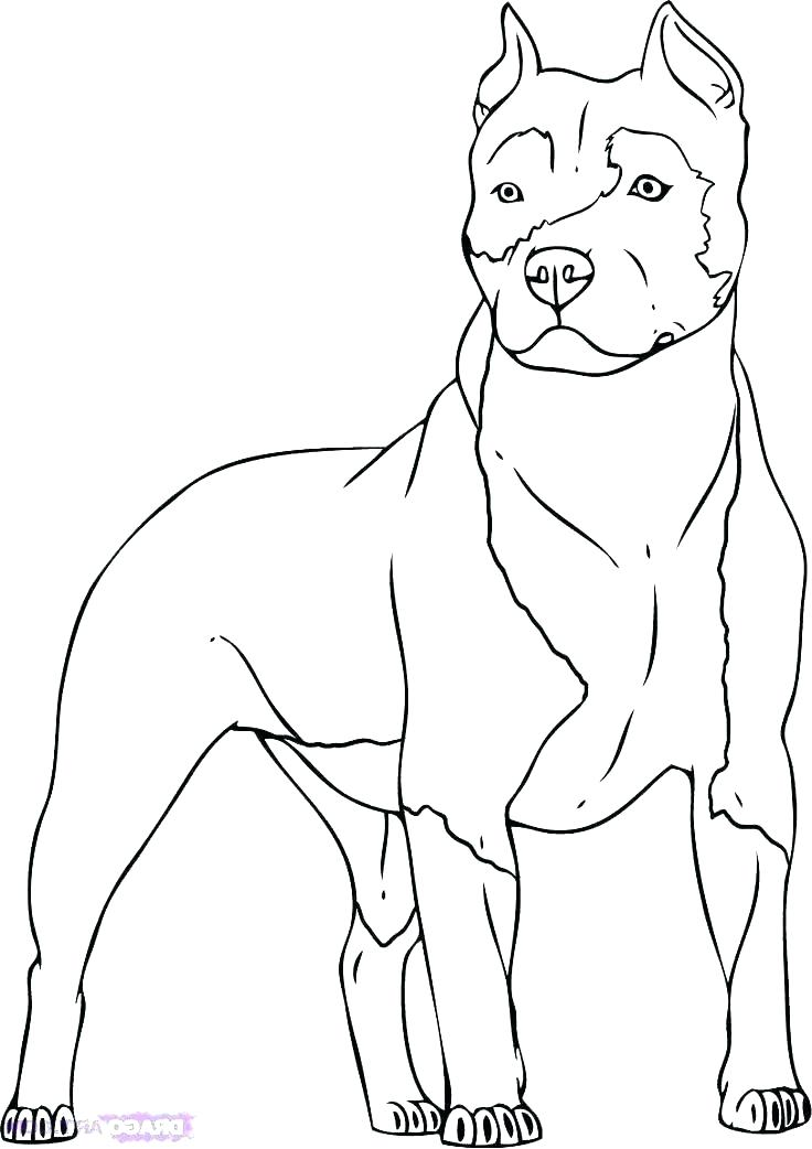 736x1042 Pitbull Coloring Page Coloring Page Coloring Pages For Adults Face