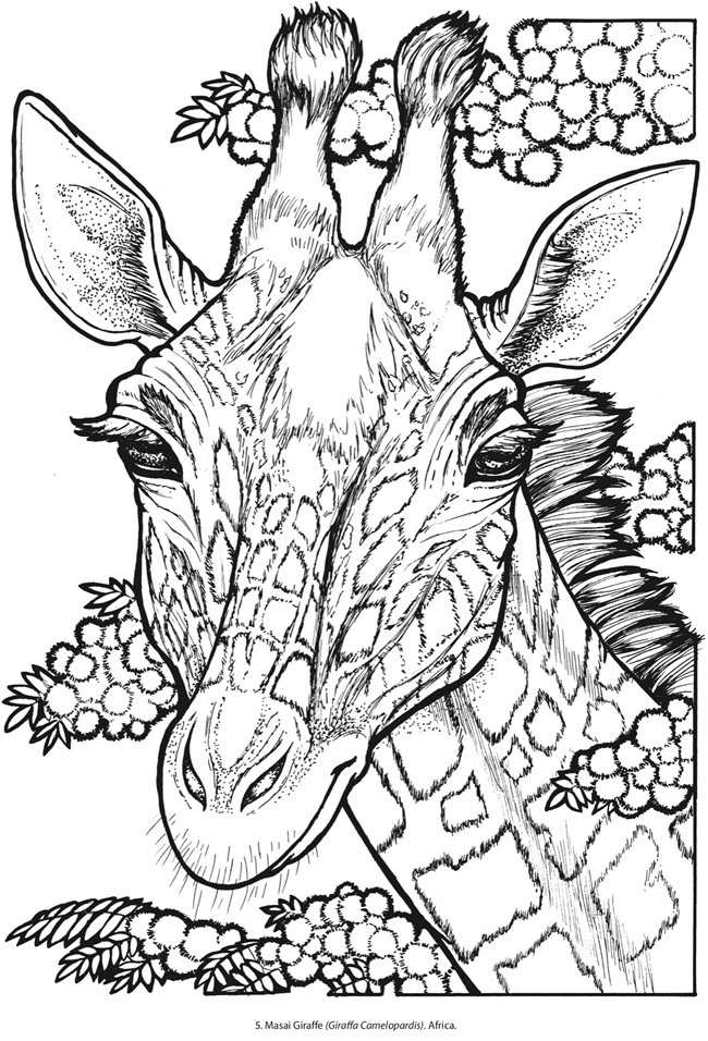 650x956 Creative Haven Wild Animal Portraits Coloring Book Ltgt Page