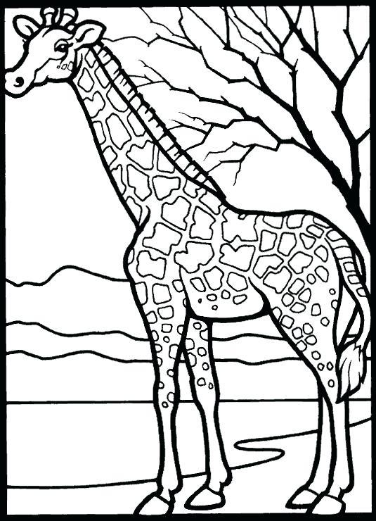 535x740 Giraffe Coloring Page Coloring Page Giraffe Giraffe Free Giraffe