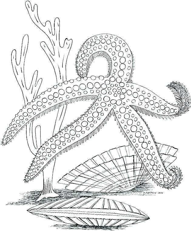 630x763 Ocean Coloring Page Coloring Pages Of The Ocean Ocean Coloring