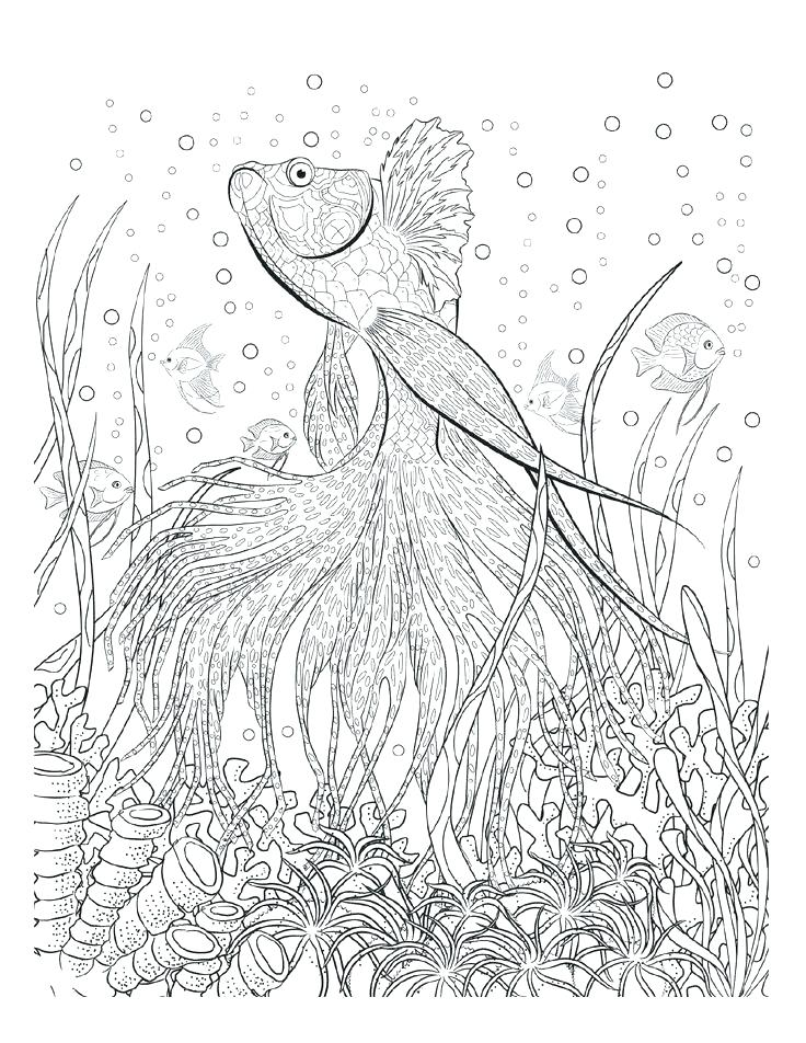 736x952 Underwater Coloring Pages Underwater Sea Coloring Pages Adult Page