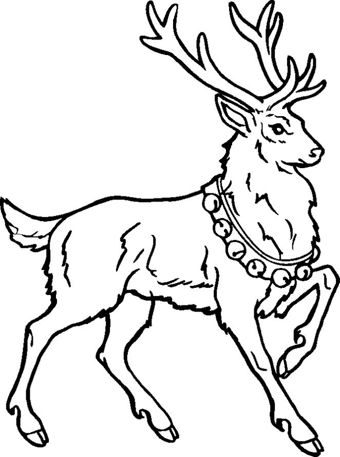 662x889 Reindeer Coloring Pages Inspirational Reindeer Caribou Coloring
