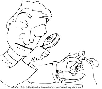 344x303 Free Coloring Pages
