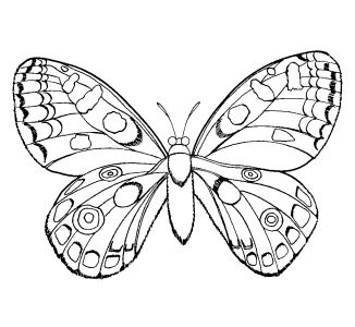 326x300 Coloring Pages For Girls