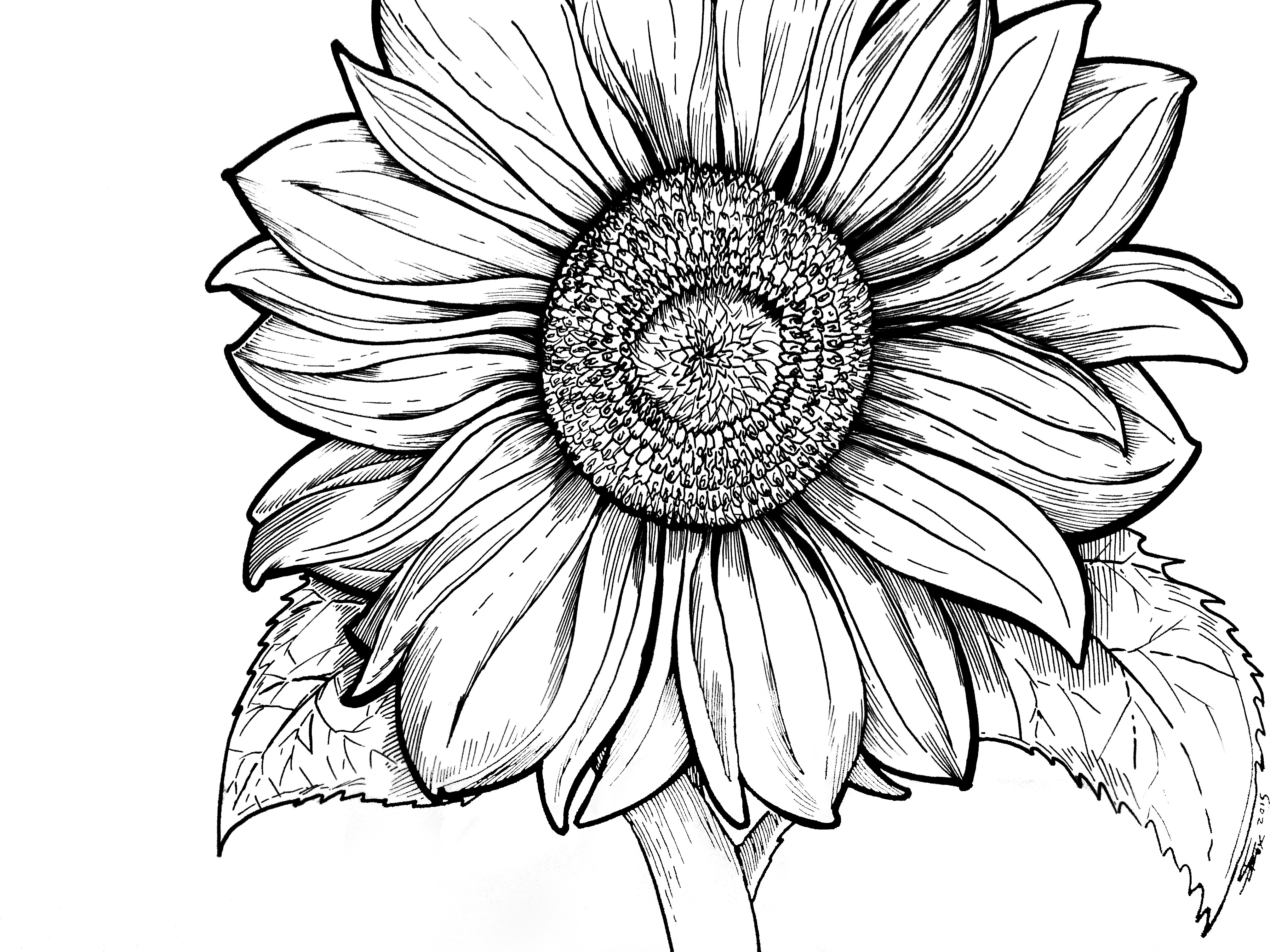 4032x3024 Natural Whimsy A Hand Drawn Coloring Book