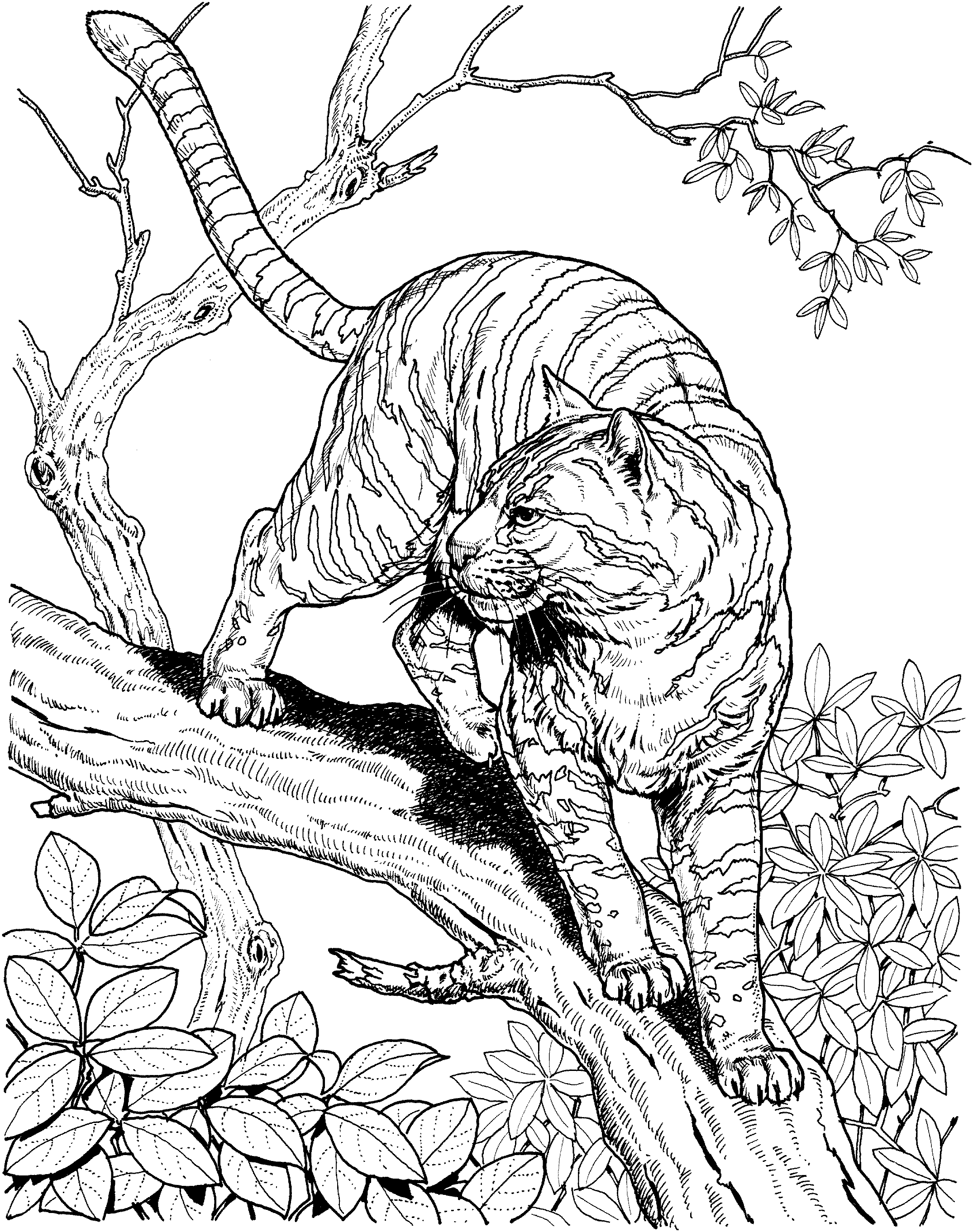 2150x2723 Hard Animal Coloring Pages Color Bros Free