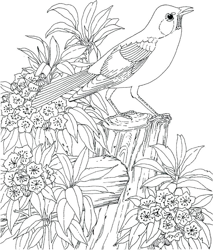 736x866 Hard Animal Coloring Pages