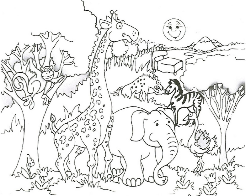 784x626 Baby Wild Animal Coloring Pages