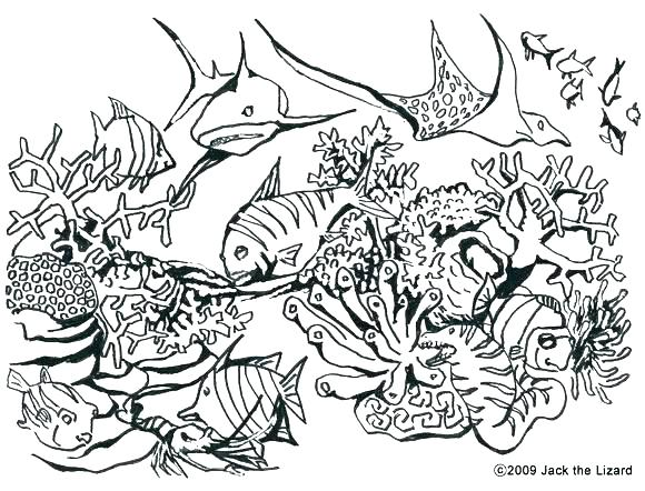 580x442 Coloring Pages Difficult Animals Hard Animal Cute Detailed Free