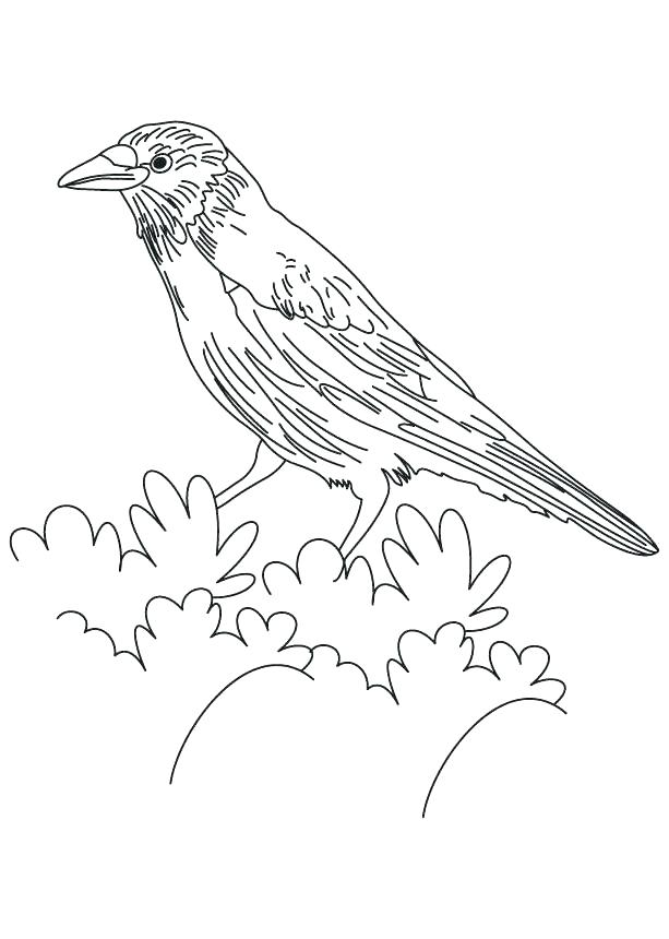 613x860 Red Tailed Hawk Coloring Page Printable Tail Common Flicker