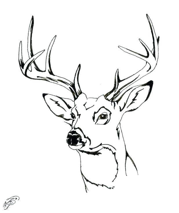 618x736 Whitetail Deer Coloring Pages
