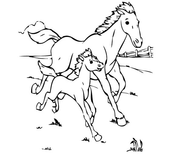 600x514 Baby Horse Running With His Mother In Horses Coloring Page
