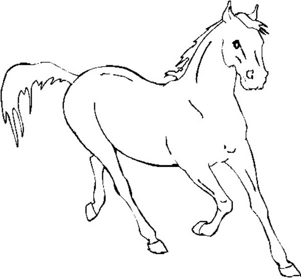 600x555 Horse Running Fast In Horses Coloring Page