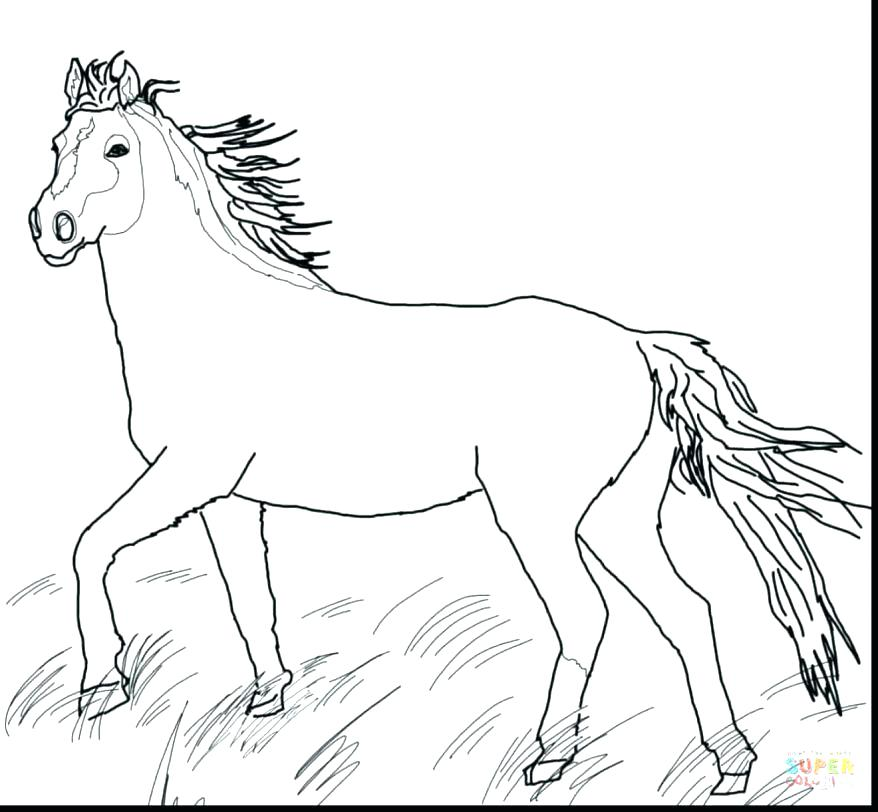 878x812 Realistic Horse Coloring Pages Coloring Horse Pages Coloring Great