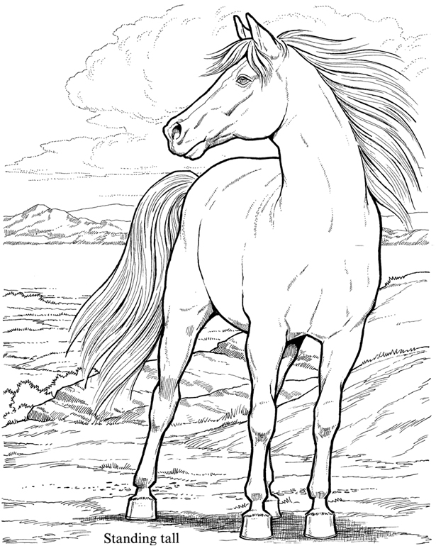 615x770 Wild Horses Coloring Pages