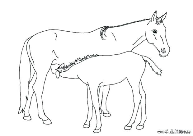 620x438 Coloring Page Of Horse Coloring Page Of Mom And Baby Horse