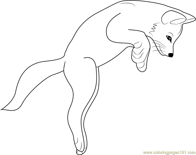 800x632 Fox Jumping Coloring Page