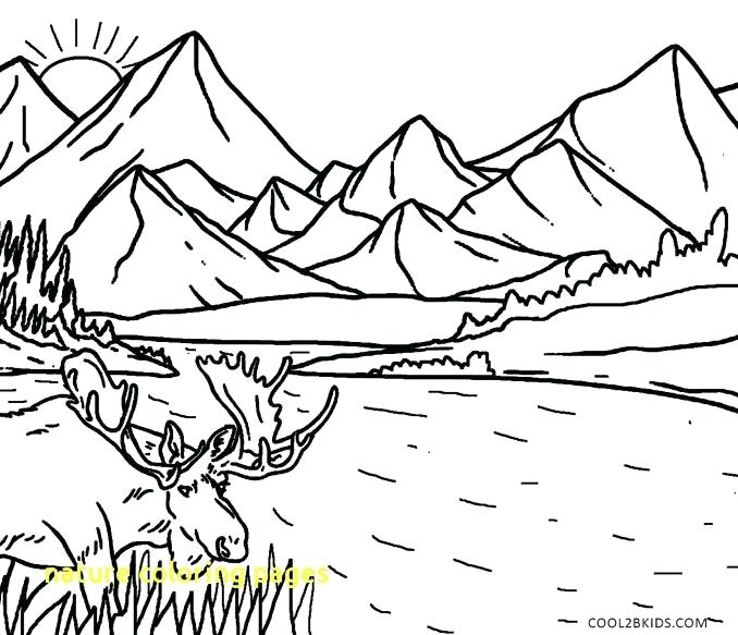 678x583 Coloring Pages Nature Nature Coloring Simple Nature Coloring Pages