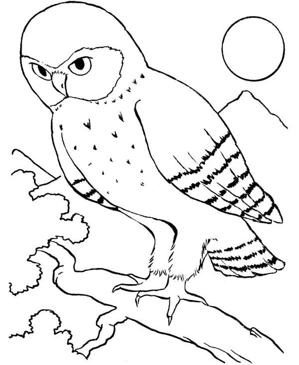 600x734 An Owl Bird Howling In The Night Coloring Page Color Luna