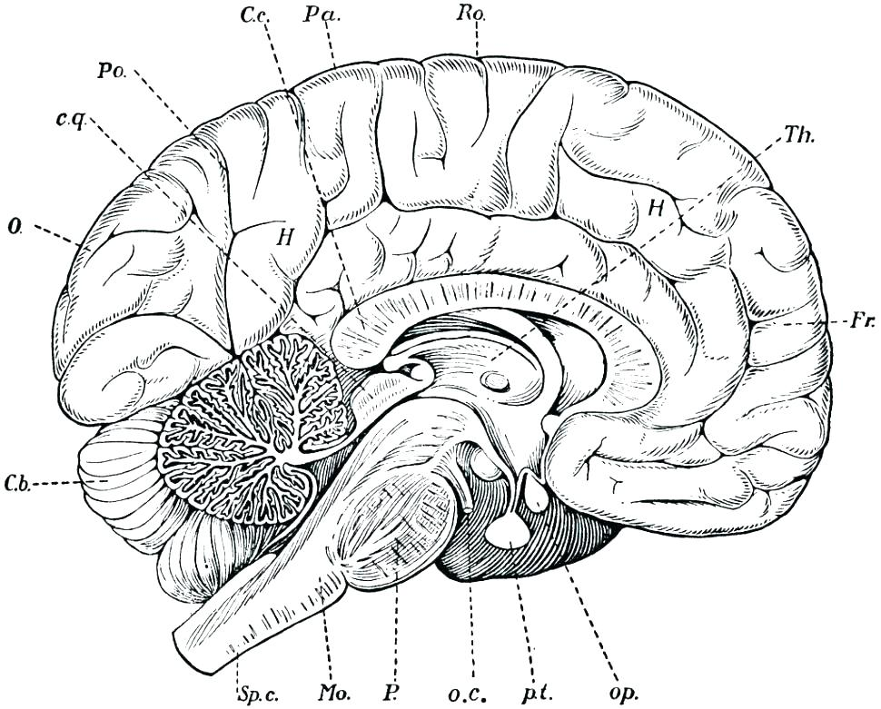 Coloring Pages Of A Brain at GetDrawings.com | Free for ...