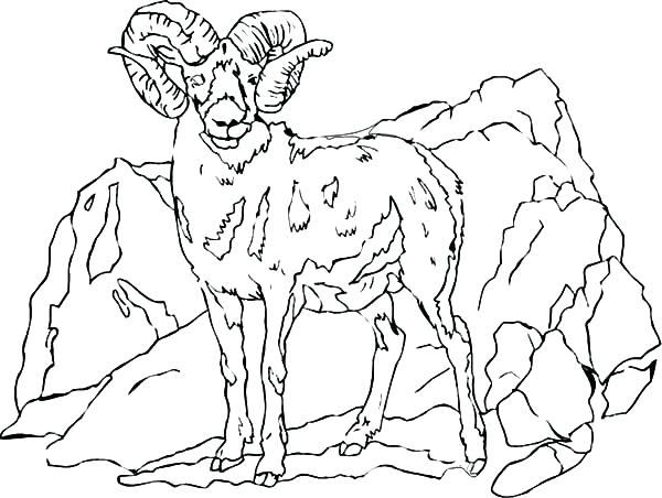 600x452 Mountain Coloring Page Mountain Goat Standing Tall Coloring Pages