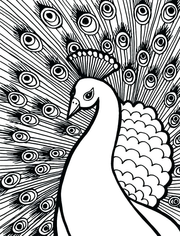 600x788 Peacock Feather Coloring Pages Peacock Feather Coloring Page