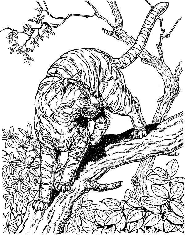 600x760 Difficult Coloring Pages Of Animals Hard Owl Tiger Liked Wild Cat