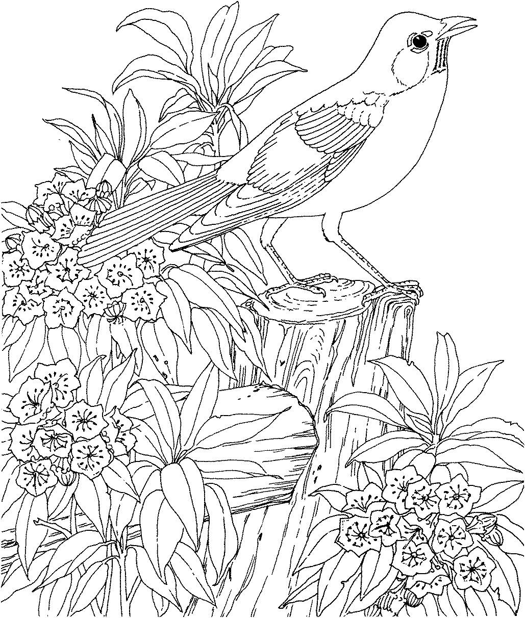 1029x1212 Hard Bird Coloring Pages For Adults Coloring Page For Kids Kids