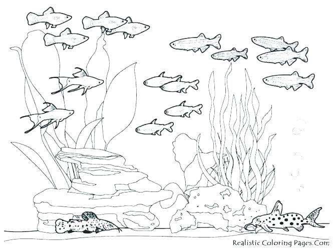 667x500 Hard Animal Coloring Pages