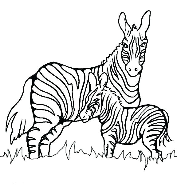 576x621 Coloring Pages Animals Hard Kids Coloring Baby Zebra Coloring