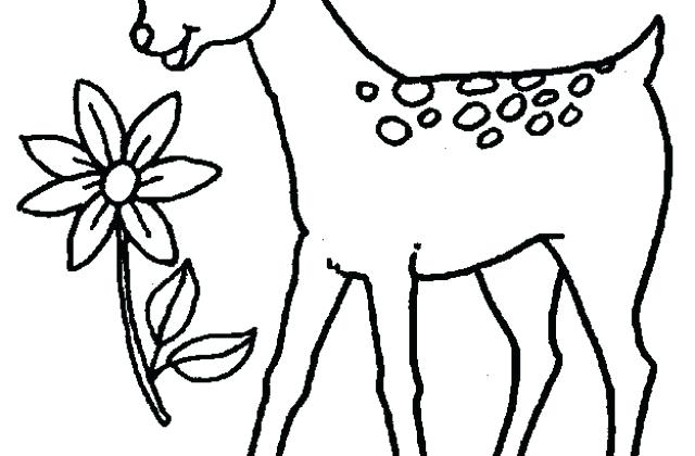640x420 Baby Deer Coloring Pages Baby Deer Coloring Pages Pictures