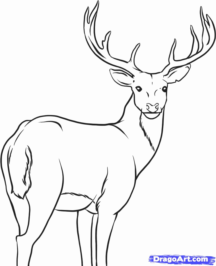 759x931 Dear Drawings How To Draw A White Tailed Deer Step Baby Deer