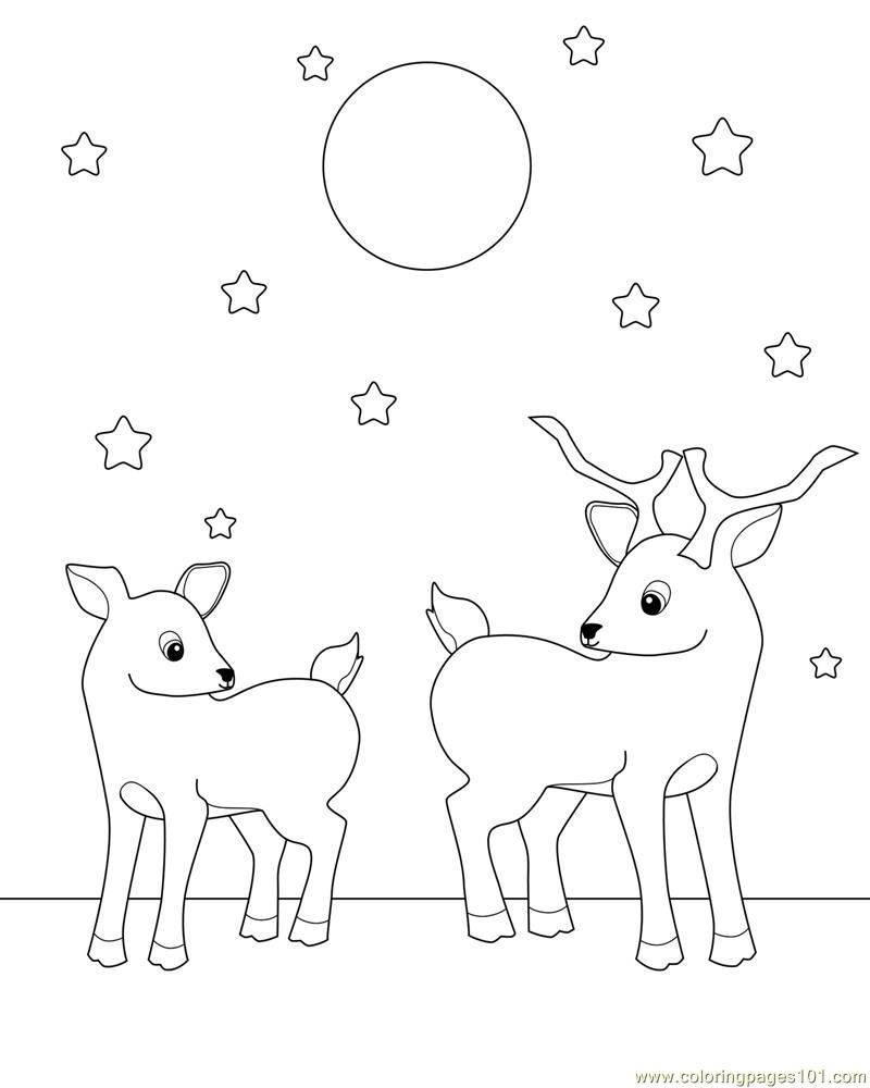 800x1000 Deer Coloring Pages For Adults Go Back Images For Baby Deer