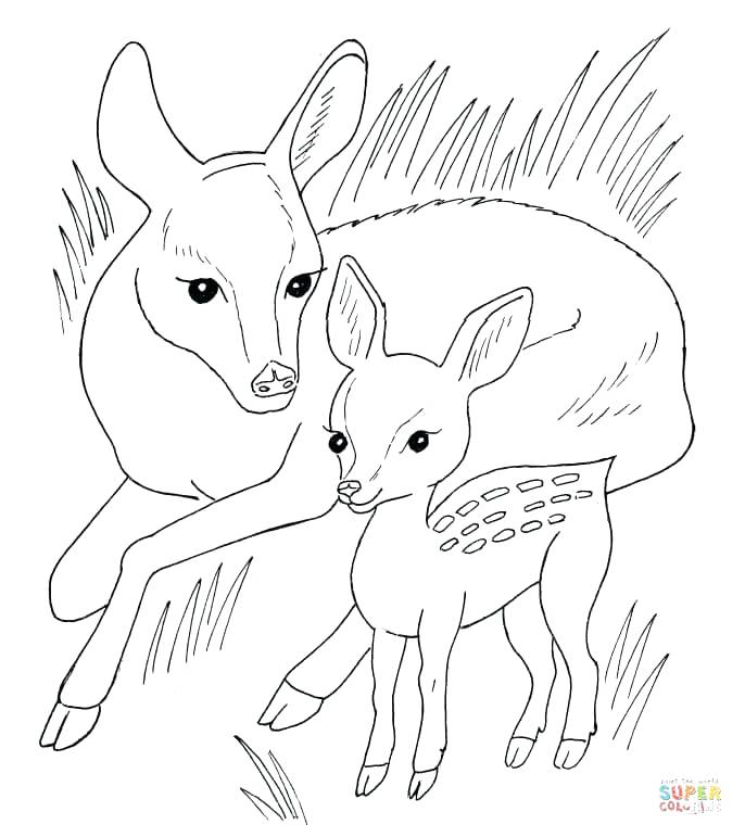 686x771 Dorable Coloring Pages Of Baby Deer Molde