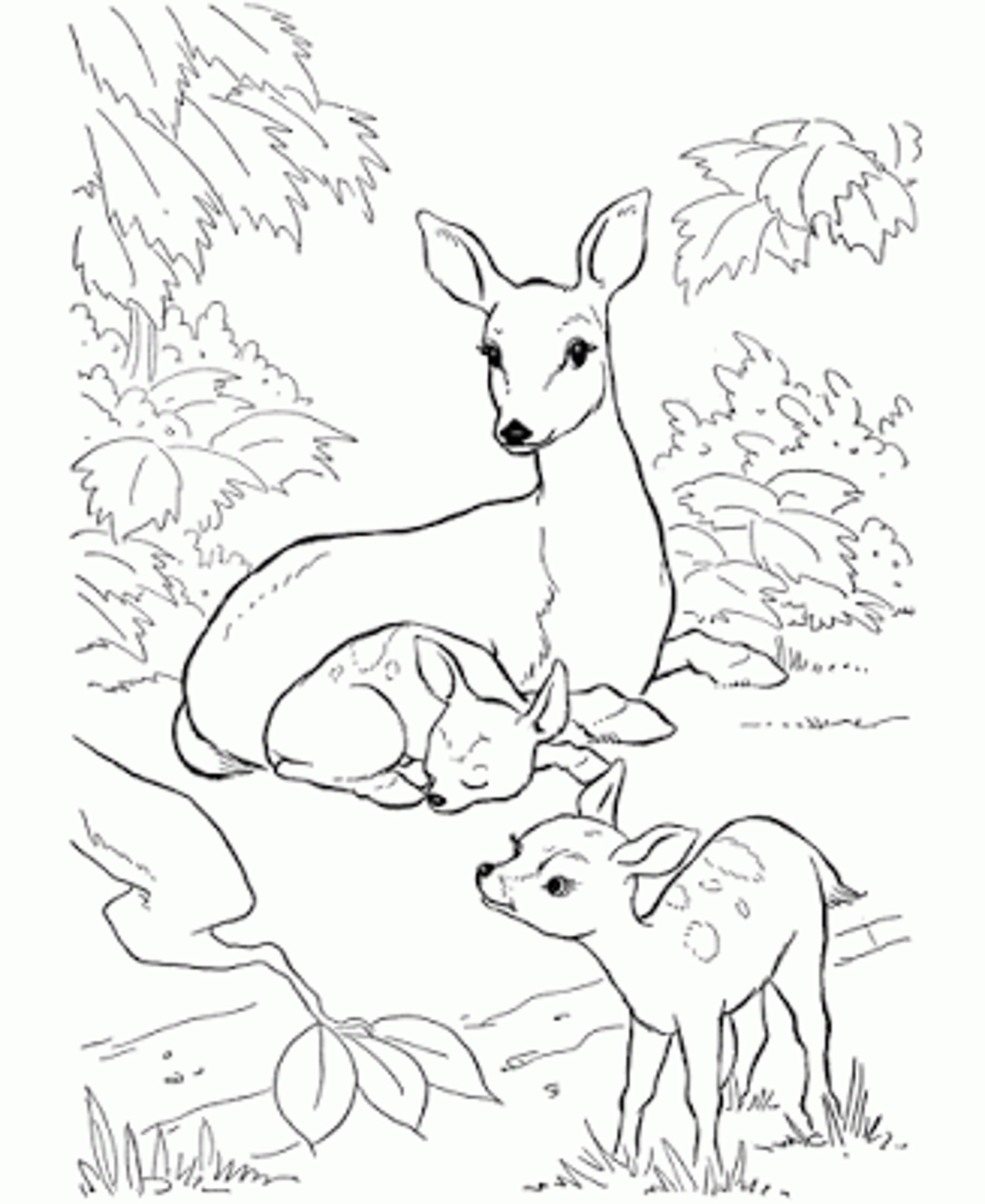 2000x2446 Baby Deer Coloring Page